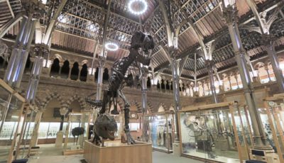 Oxford Museum of Natural History – ext
