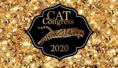 Cat Congress SP 2020 3D Model
